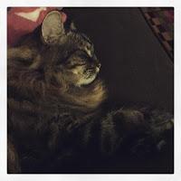 Pasha Sleeps